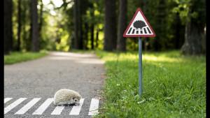 Настоящие дорожные знаки для самых маленьких жителей Вильнюса!
