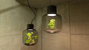 Лампа-террариум с закрытой экосистемой
