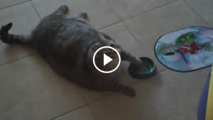 Толстый Барсик просит кушать