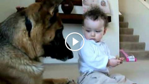 Дожили! Ребенок отнимает еду у собаки