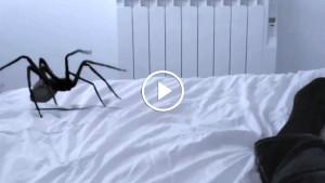 Он хотел поймать огромного паука, но все пошло не так как он планировал