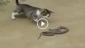 Вот это реакция! Настоящий охотник на змей!