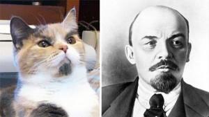 Коты и их двойники