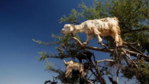 13 Парадоксов Природы, Которые Поражают Воображение
