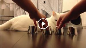 Кручу — верчу, кота запутать хочу!