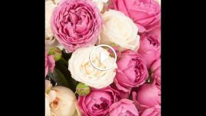 Пионовидные розы — чудо, как хороши