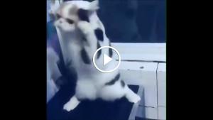 Котик тренируется