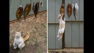 17 котов, которые пытались что-то украсть