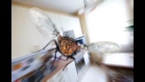 Простые способы избавиться от надоедливых насекомых