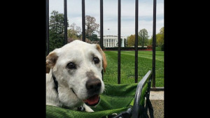 Когда хозяин узнал о смертельной болезни своего пса, то решил подарить ему последнее путешествие