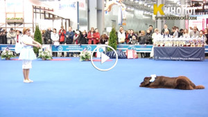 Мастерство дрессировщицы и талант собаки превратили выступление в настоящую сказку!