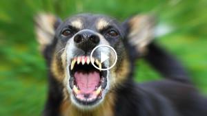 В Китае, петиция против поедания мяса собак собрала 11 млн подписей