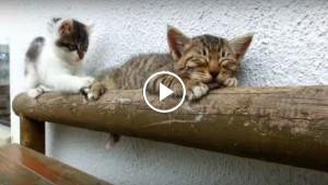 Самые милые котята в мире!