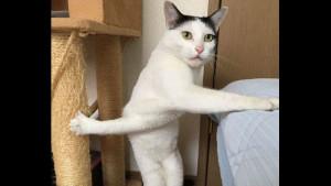Эта испуганная кошка стала звездой интернета!