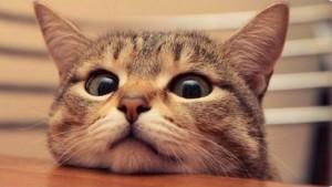 Какие обязанности у Вашего кота по дому?