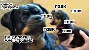 34 самых смешных собачьих фото, известных человечеству!