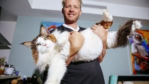 Титулованный богатырь Самсон —самый большой кот в Нью-Йорке!