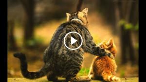 Странная реакция кошки на своих котят, это надо увидеть!