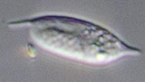 Обнаружен самый неуловимый организм на Земле