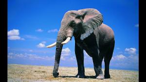 Самое сильное животное на Земле может поднимать удивительные веса