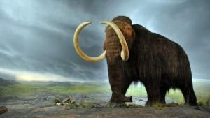 Люди или климат: как мамонты исчезли с лица Земли?