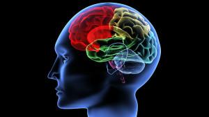 Мы неправильно оцениваем человеческий мозг