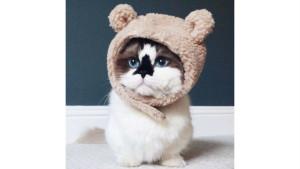 Кот по кличке Альберт — еще одна звезда соцсетей (12 фото)