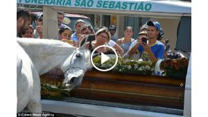 Конь пришел на похороны хозяина. Когда животное начало рыдать, у людей отняло дар речи…