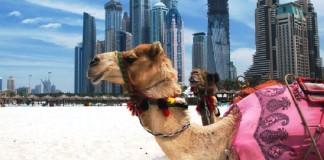 удивительных фактов о Дубае