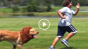 Страшный лев сбежал от своего дрессировщика! Впечатлительным лучше не смотреть…