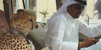 мрачных фактов о Дубае