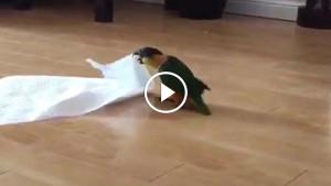 Они дали своему питомцу бумажное полотенце. Реакция птицы сделала мой день!