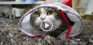 кот Мару