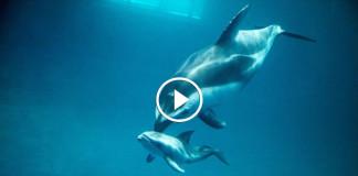 рождение дельфина